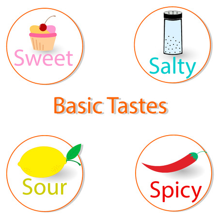 salty: Basic tastes. Vector illustration infographics. EPS 10 Illustration