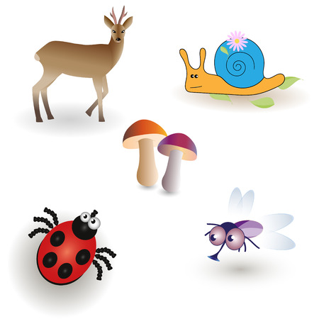 fungi: Miscellaneous - Ladybird, fly, fungi, ROE deer and the snail