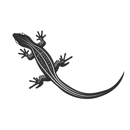 dragon tattoo design: Beautiful  monochrome lizard, lizard silhouette. Vector illustration.