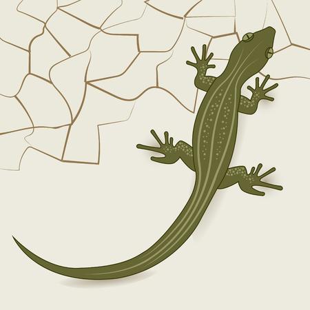 The background of the desert lizard.