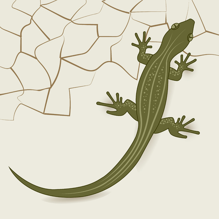 desert lizard: The background of the desert lizard.