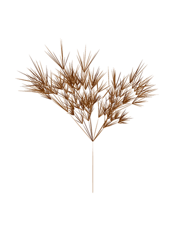 Reed stems , sugar cane or bamboo leaves, thin narrow leaves.Different shades of brown. Isolated on white background