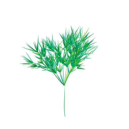 Reed stems , sugar cane or bamboo leaves, thin narrow leaves.Different shades of green. Isolated on white background Stock Vector - 114776656