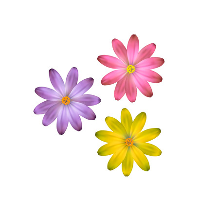 Three flowers of different colors, vector flowers.