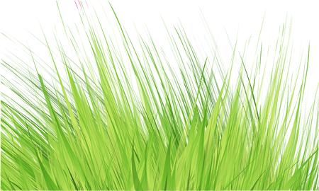 Grass Border , Abstract green grass . Vector Illustration