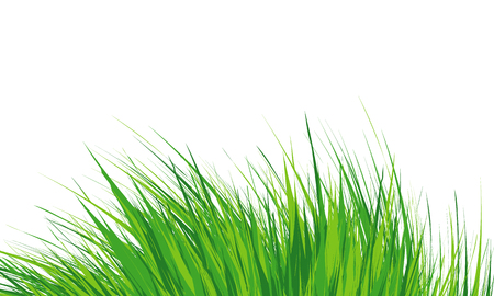 Grass Border Abstract green grass . Simple meadow grass, wild lawn. Flat vector.