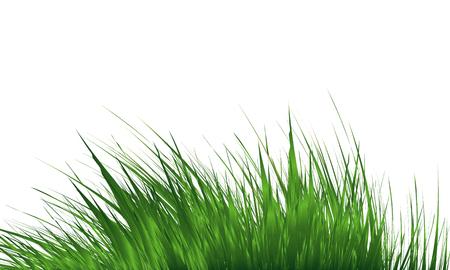 Grass Border , Abstract green grass . Simple meadow grass, wild lawn. Vector Illustration Ilustração