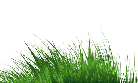 Grass Border , Abstract green grass . Simple meadow grass, wild lawn. Vector Illustration Illustration