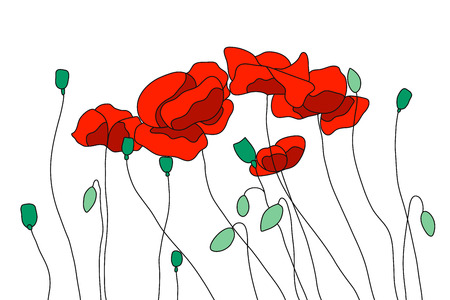 Red field poppies, flowering poppies. Buds, stems and seeds .Vector illustration