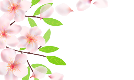 Flowers, branches and leaves of Sakura background. Cherry blossoms , flying petals. Branches with green leaves.