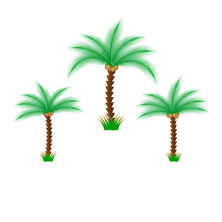 Palm trees isolated on white background. Beautiful vectro palma tree set vector illustration. Illustration