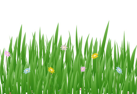 Grass Border with flowers , Vector Illustration. Illustration