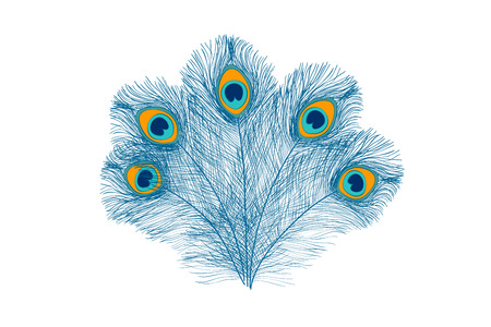 Peacock feathers, flat style. Straight and curved. Blue colored feathers of exotic birds