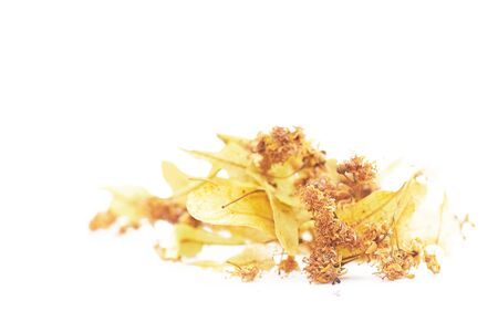 Isolated dried inflorescence of yellow Linden. Fragrant Linden tea