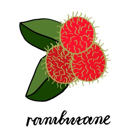 Three ripe red rambutan fruits, with two green leaves. Vector picture drawn by hand.