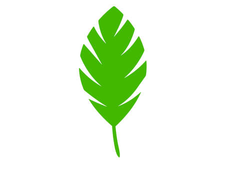 Green abstract leaf icons natural on white background. Wild cartoon tropical leaves. Leaves of different plants. 矢量图像