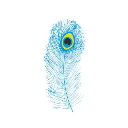 Peacock feathers, flat style. Straight and curved. Blue colored feathers of exotic birds. 矢量图像