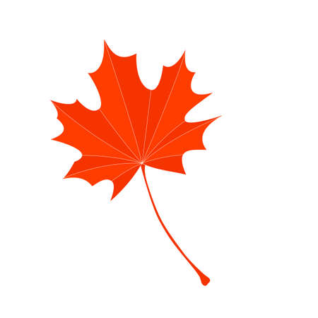 maple leaves. Red and yellow autumn maple leaves on transparent background 矢量图像