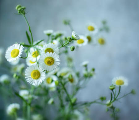Summer village bouquet of small white flowers on a soft blurred air background. White flowers on blue background
