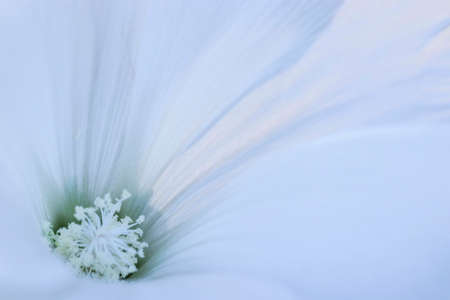 White flower close up. White macro flower. 免版税图像