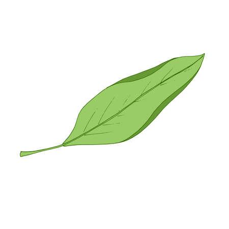 Autumn leaf fly in the wind. Tree leaf. Vector Vektorgrafik