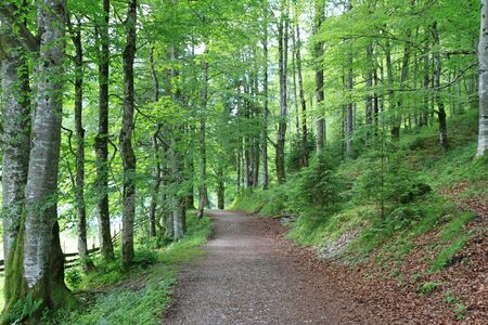 A trekking pathway in the forest in Tirol, Austria Stock Photo - 10932470