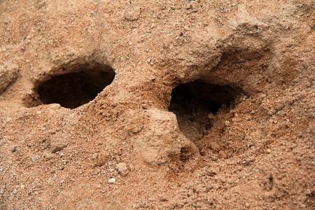 burrow: Rabbit holes Stock Photo