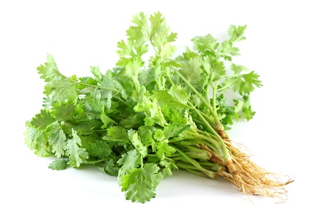 coriander: Closeup photo of fresh coriander (Leaves and Roots) on white background
