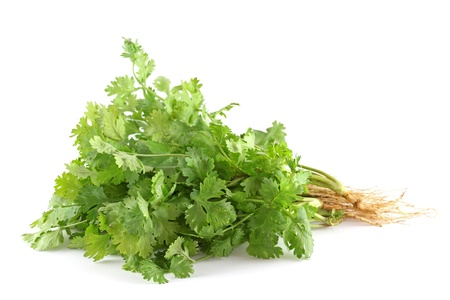 coriander: Closeup photo of fresh coriander (cilantro) with roots on white background