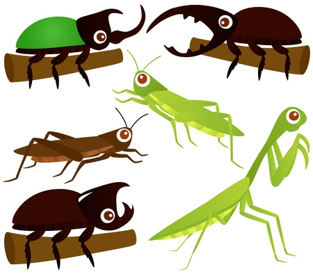 cartoon insect: A colorful Theme of cute Icons : Grasshopper, Beetle, Praying Mantis