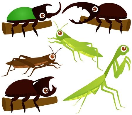 escarabajo: Un tema de iconos de colores lindos: saltamontes, escarabajos, mantis religiosa