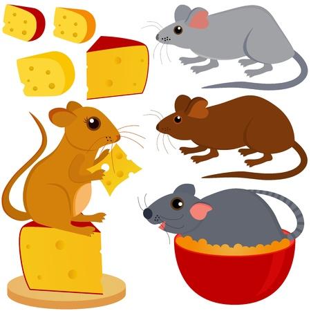 rata caricatura: Una colecci�n colorida y linda de la rata y el rat�n queso aislado en blanco