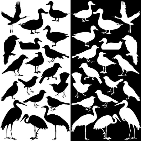 A collection of birds silhouettes (Black and White)  Vector