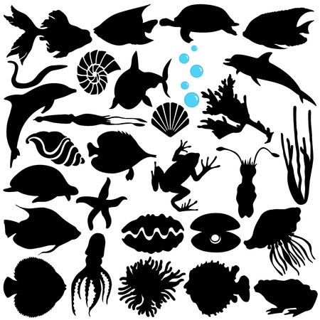 animal themes: A Vector Silhouette of Fish, Sealife, (Marine life, seafood)