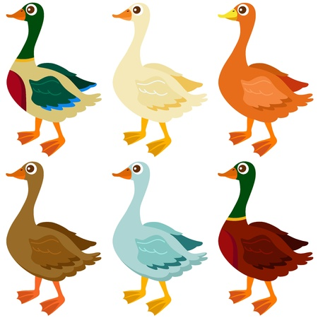 Cute vector Icons : Ducks, Goose, Geese isolated on white