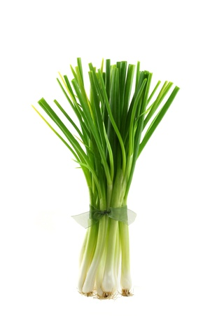 A bunch of fresh green Spring Onion standing, tied into bundles, isolated on white background