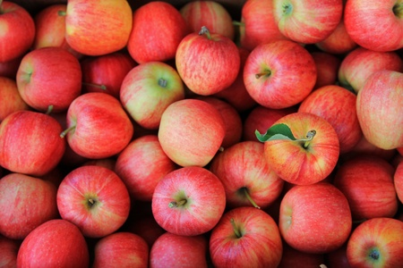 Background photo of Freshly picked ripe Red Apples  photo
