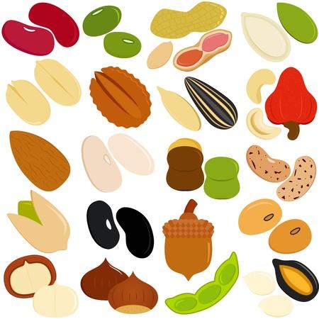 macadamia: Vector Icons de haricots, noix, graines
