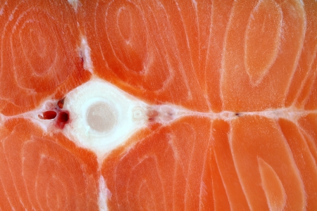 Frozen meat: Closeup of raw salmon