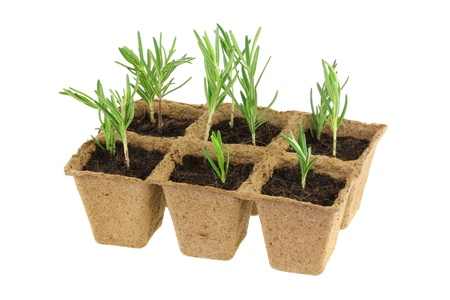 Eco Friendly and Biodegradable Plant Pots for growing seeds, Isolated on white  Stockfoto