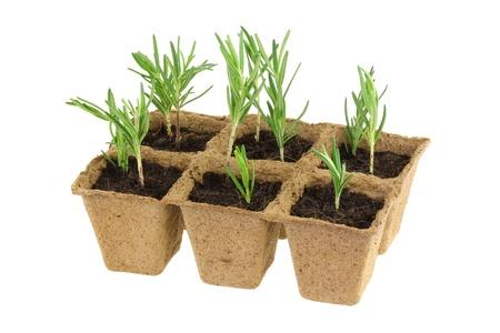 Umweltfreundlich und biologisch abbaubare Blumentöpfe für wachsende Samen, isoliert auf weiß Standard-Bild - 21926613