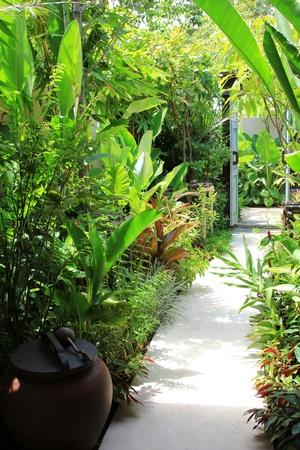 green door: Tropical plants along walking path to the door