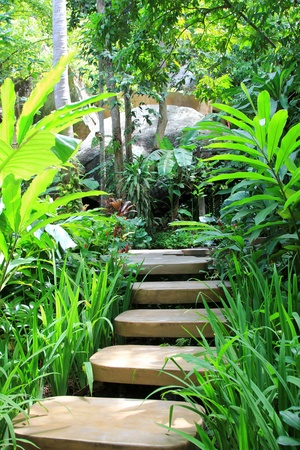 Tropical plants along polished concrete steps in the garden photo