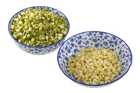 gram: Bowls of Mung Bean  Green gram  Sprouts with and without green skins