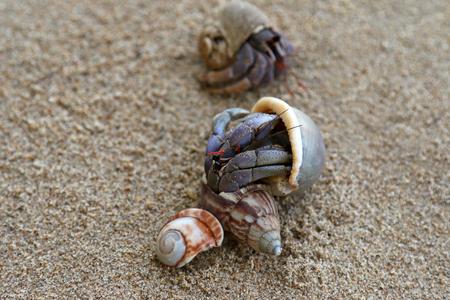 hermit crabs: Closeup photo of Hermit Crabs on the sand Stock Photo