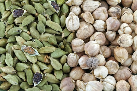 Closeup of Dried green Cardamon pods and Round Siamese Cardamom (Camphor Seed) Stock Photo