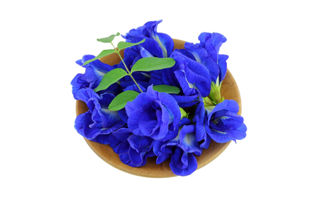 genitals: A bowl of Clitoria ternatea Butterfly Pea Blue Pea isolated on white