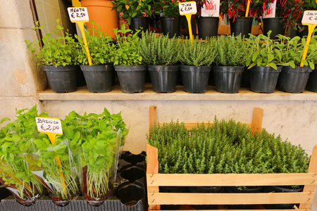 the merchant of venice: Different types of fresh herbs in pots for sale at the Italian market in Venice, Italy