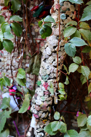 juliets: Tree trunks and wall full of chewing gum and locks at Juliets house Casa Capuleti in Verona, Italy. A couple usually mutually chew gum and stick to the tree and wall. Stock Photo
