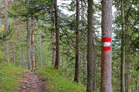 hiking path: A tree painted in red and white indicating the official hiking path in Austria Stock Photo